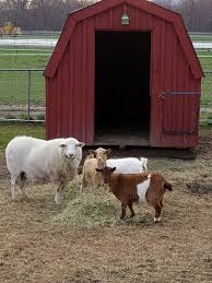 Farm Animals NJ | Farms View Farm Childrens Bnyard Farm Animals Felt Mini Combo Of 4 Masks Free Animal Clipart Clipartxtras 25 Unique Animals Ideas On Pinterest Animal Backyard How To Start A Bnyard Animals Google Search Vector Collection Of Cute Cartoon Download From Android Apps Play Buy Quiz Books For Kids Interactive Learning Growth Chart The Land Nod Britains People