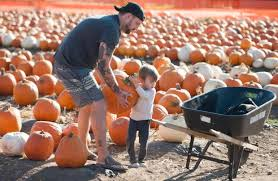 Irvine Pumpkin Patch Tanaka by Here Are The Best Photos At Orange County Pumpkin Patches In 2016