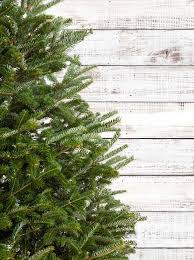 Christmas Tree Hill Shops York Pa by Best 25 Artificial Christmas Tree Clearance Ideas On Pinterest