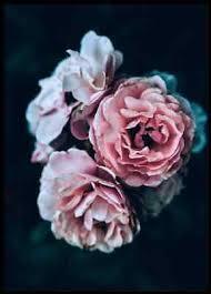 poster bild desenio 30x40cm dusty fotodruck mit bilderrahmen roses ebay