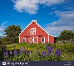 Red Barn, Blue Sky With Lupine Flowers In The Foreground, Acadia ... The Red Barn At Outlook Farm Wedding Maine Otography Private Events Primo 2017 Wedding Packages In May Part 1 Linda Leier Thomason A Photography Rustic Elegance Photo Credit Focus Tavern Free Images Farm Lawn Countryside House Building Home Tone On Autumn New England And Fence Against Blue Skymount Desert