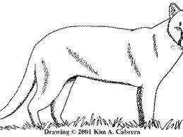 Animal Tracks Mountain Lion Cougar Puma Concolor
