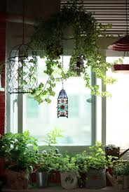Best Pot Plant For Bathroom by 131 Best Plant In Bathroom Images On Pinterest Hanging Plants