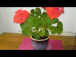 Plants In Bathroom Feng Shui by How To Use Feng Shui In Bathrooms Youtube