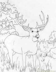 Coloring Pages Muledeer Mammals Deer Free Printable