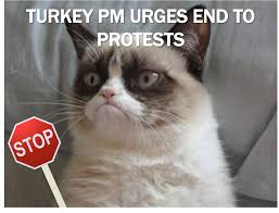 cat stop current event cat of the day turkish protests plus cats