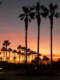 California Palm Trees Sunset Tumblr
