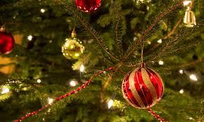 Christmas Tree Has Aphids by Niagara Garden U2013 Rice Road Greenhouses