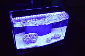 AIO Arc 6 25G reef All In e Tanks Nano Reef munity