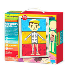 Human Anatomy For Kids Image Is Loading Human Anatomy Model For Kids