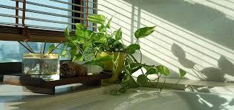 pflanzen fürs badezimmer diese eignen sich besonders gut