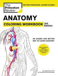 Anatomy Coloring Workbook 3rd Edition By Princeton Review Paperback