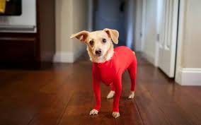 Do All Dogs Shed by Dog Leotards U2013 An Inspired Solution To Keep Pet Hair Off Your