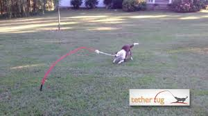 The Best Dog Toy Ever! Tether Tug Outdoor Dog Toy - YouTube Dog Leashes Leads Best For Pets Petco How To Make A Leash Holder Leash Holder And Quadpro Retractable Leashpet Lead 315 Inches For Urpower 164 Feet Nylon Official A Guide Buying The Rover Blog Installation Of Cable Run Youtube Offleash Dog Bar Opens In Fairhaven Tap Trail Side Yard Solution Pet Friendly Xgrass Artificial Turf Run The Dog Yard Aliexpresscom Buy Traction Rope 2017 Abs Large Handle April 2012 Backyard Beyond Fence Borders Tips About Safety