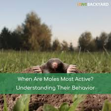 When Are Moles Most Active? (Dec, 2017) Understanding Their Behavior How To Get Rid Of Moles Organic Gardening Blog Cat Captures Mole In My Neighbors Backyard Youtube Animal Wikipedia Identify And In The Garden Or Yard Daily Home Renovation Tips Vs The Part 1 Damaging Our Lawn When Are Most Active Dec 2017 Uerstanding Their Behavior Mole Gassing Pests Get Correct Remedy Liftyles Sonic Molechaser Alinum Covers 11250 Sq Ft Model 7900