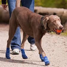 Dog Socks For Hardwood Floors Petco by Sport Pawks Dog Socks Blue Heather With Same Day Shipping