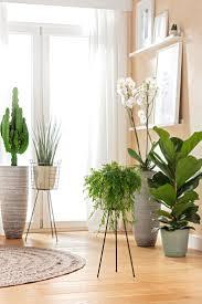 pflanzen für bodentiefe fenster wohnzimmer pflanzen
