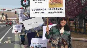 100 Ned Calls Truck Nuts Wild Horse Advocates Oppose BLM Helicopter Gather In Pine Nut Range