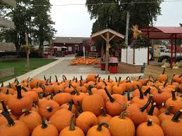 Pumpkin Festival Ohio by Your Guide To The Best Central Ohio Fall Festivals