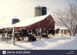 Wisconsin Dairy Farm With Red Barn, Tall Storage Silo And Green ... Red Barn Green Roof Blue Sky Stock Photo Image 58492074 What Color Is This Bay Packers Barn Minnesota Prairie Roots Pfun Tx Long Bigstock With Tin Photos A Stately Mikki Senkarik At Outlook Farm Wedding Maine Boston 1097 Best Old Barns Images On Pinterest Country Barns Photograph The Palouse Or Anywhere Really Tips From Pros Vermont Weddings 37654909