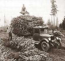 Harvesting Douglas Fir Trees From Natural Stands During The Early 1940s Near Shelton WA Courtesy Of Pacific Northwest Christmas Tree Association