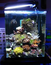 aquarium nano eau de mer twinnanoreefs de la réflection à la réalisation canned fish