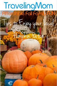 Denver Pumpkin Patch Corn Maze by Best 25 Local Pumpkin Patch Ideas On Pinterest Mums And
