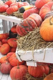 South San Jose Pumpkin Patch by 182 Best Pumpkin Patch Images On Pinterest Autumn Fall Fall