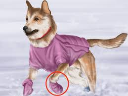Big Dogs That Dont Shed Bad by 4 Easy Ways To Keep Dogs Warm In The Winter With Pictures