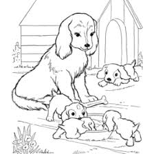 Free Printable Dog Coloring Pages Maltese Page