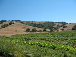 Nicasio Pumpkin Patch Marin by Nicasio Pumpkin Patch Directions To
