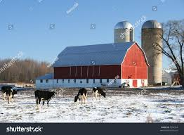 Red Wisconsin Dairy Barn Winter Cows Stock Photo 7296334 ... Holstein Dairy Cattle In A Green Field With Red Barn Stock Campground Home 1201 Best Barns Images On Pinterest Country Haing At The Big Aslrapp I Lived A Dairy Farm When Was Girl And Raised Calves Ihocalendar Ihocalendarcom Showcases Photos From Wisconsin Summer Photo 37409353 Shutterstock Herd Of Cows In Pasture With Large Red Family Farms Maker Puts Local Farmers First Pole Barn Sweet