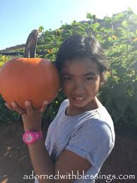 Pumpkin Patch Parable Youtube by Fall Adorned With Blessings