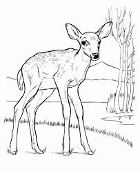 Free Printable Deer Coloring Pages For Kids Throughout The Elegant Baby Regarding Invigorate