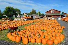 Pumpkin Patch Near Bay Area by Best Pumpkin Patches In Upstate Ny 21 Picking Destinations For