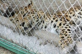fauverie du faron picture of zoo fauverie du faron toulon