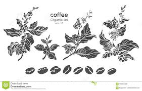 Vector Set Of Coffee Tree Branch Stock