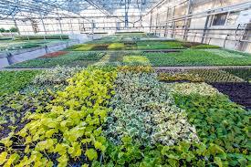 Christmas Tree Farms Near Lincoln Nebraska by Herbs Begonias Starter Plants U0026 Perennials From Peace Tree Farm