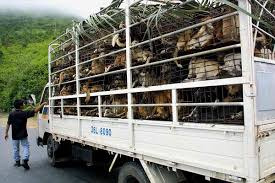 100 Fugu Truck Thriving Dog Meat Trade The ASEAN Post