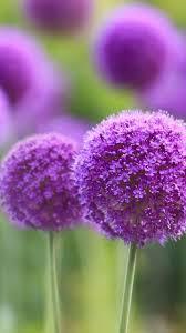 Beautiful Flowers Samsung Galaxy A5 Wallpapers HD 720x1280