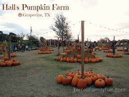 Real Pumpkin Patch Dfw by Fall Fun In The Dallas Fort Worth Area Southlake Tx Real Estate