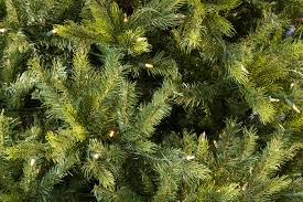 Dunhill Fir Christmas Trees by 6ft Pre Lit Grand Fir Life Like Artificial Christmas Tree Hayes