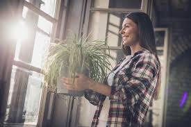 diese 7 pflanzen verbessern das raumklima richtiggut de