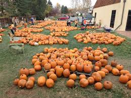Colorado Pumpkin Patch by 5 Amazing Pumpkin Patches In Colorado You Must Visit This Fall