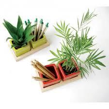 plantes pour bureau plantes et graines des objets publicitaires écologiques 100