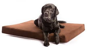 Top Rated Orthopedic Dog Beds by Top 6 Best Orthopedic Dog Beds Reviews Best Top Care With Dogs