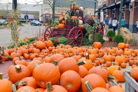 South San Jose Pumpkin Patch by Patch Derby Street Shoppes Hingham 14 October