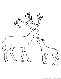 Coloring Pages Baby Deer Mammals