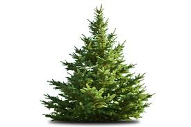 Daves Pumpkin Patch Brandon Fl by Dave U0027s Christmas Tree Lot U2013 Every Season Starts With Us