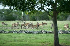 How to Effectively Use a Deer Feeder The Outpost Hunting